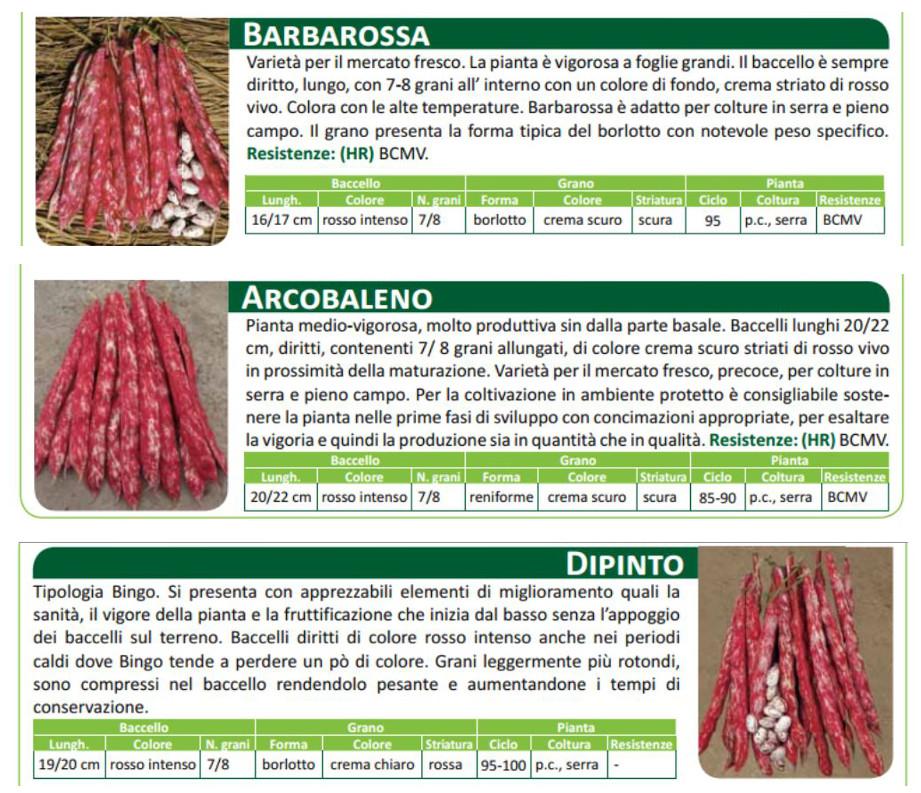 Sementi-Fagiolo-da-sgrano-rampicante-DIPINDO-BARBAROSSA-ARCOBALENO