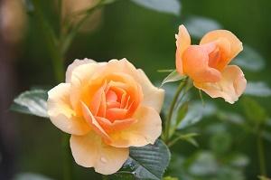 concime-per-piante-e-fiori