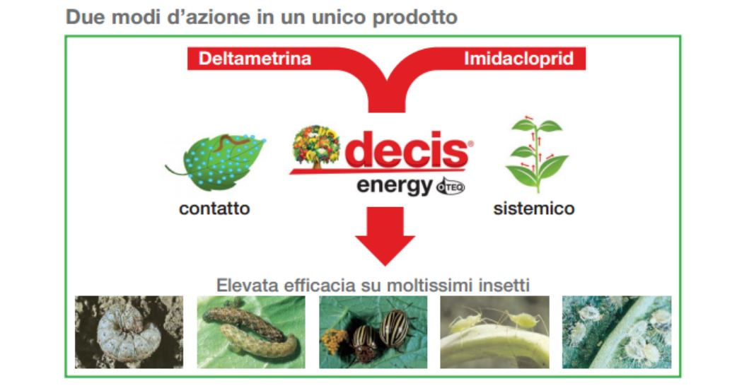 Decis-Energy-O-TEQ-etticida come agisce