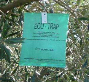 eco-trap mosca olearia - trappola per mosca dell'olivo