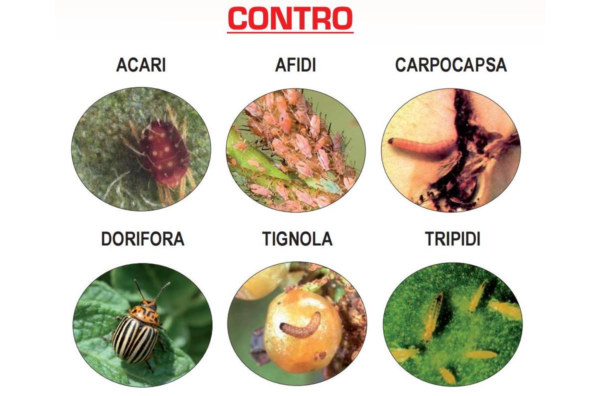 klartan-20-ew-insetticida-piretroide-parassiti-drupacee-tau-fluvalinate-insetti-bersaglio