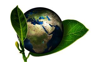nutrizione-delle-piante-bio