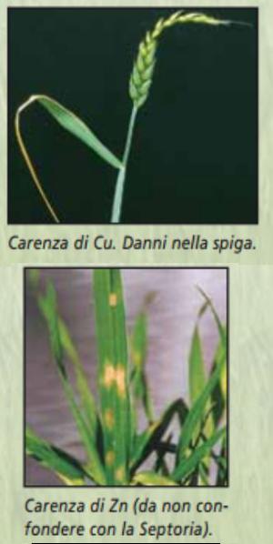 welgro-cu+zn-carenza