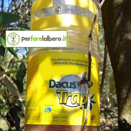 DACUS TRAP trappola mosca dell'olivo 12 Bottiglie