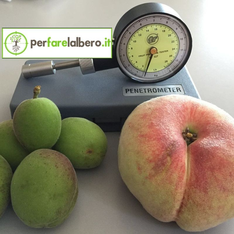 53200 Penetrometro per frutta Turoni