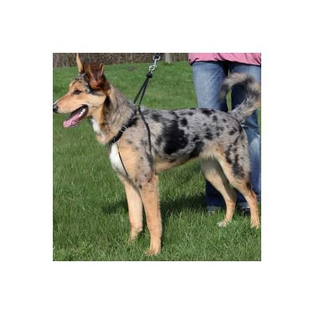 Pettorina per cani d'addestramento EasyWalk Basic