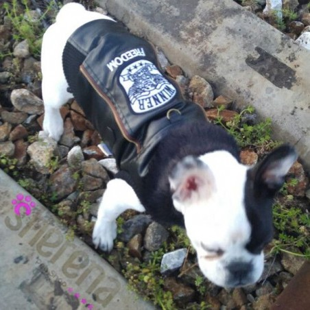 Giubotto per cani Freedom Croci