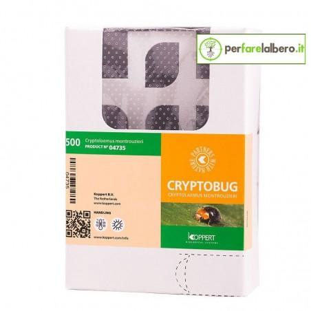 CRYPTOBUG Koppert Cryptolaemus montrouzieri contro la cocciniglia cotonosa
