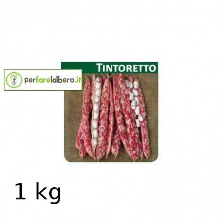Sementi Fagiolo da sgrano nano TINTORETTO - 1 kg