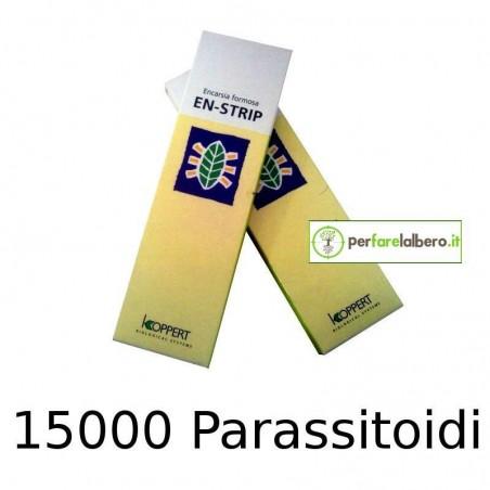 EN-STRIP KOPPERT Encarsia formosa Pupe di Mosca Bianca parassitizzate - 15000 PARASSITOIDI