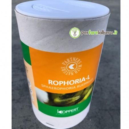 Rophoria-L Syrphidae Sphaerophoria rueppellii contro afidi 1000 larve