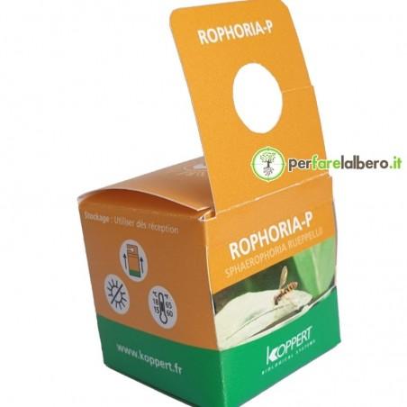 Rophoria-P Syrphidae Sphaerophoria rueppellii contro afidi 100 pupe