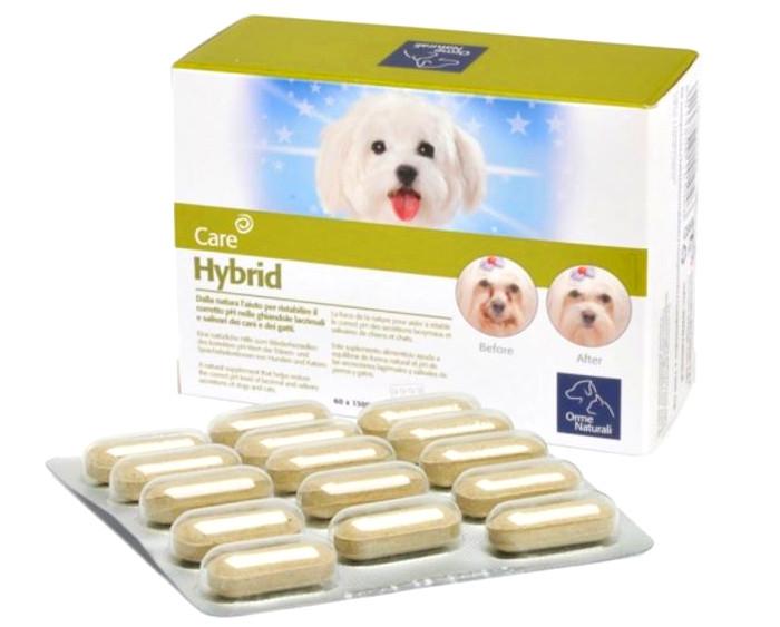 hybrid care