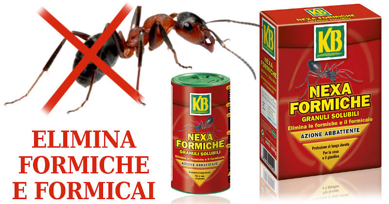 Come eliminare le formiche in casa con nexa formiche - Come debellare le formiche in casa ...