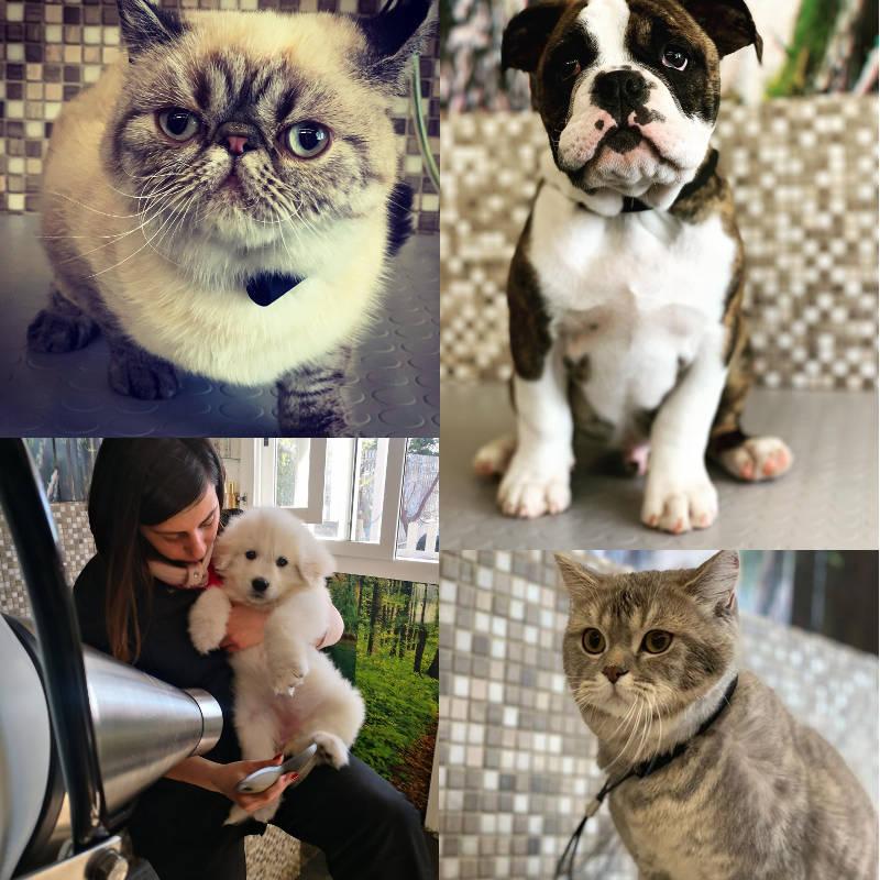 lavaggio cani e gatti policoro