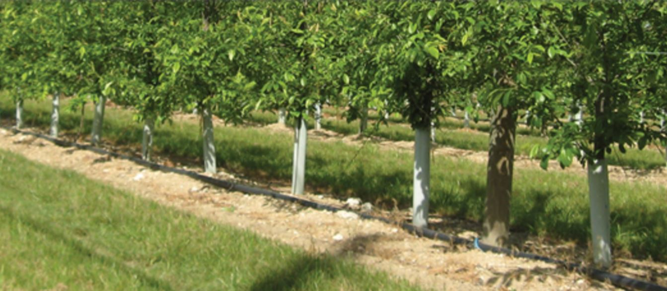 Shelter di protezione tubex fruitwrap protezione alberi da for Alberi da frutto