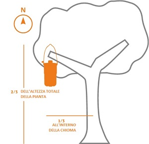posizionamento-in-albero