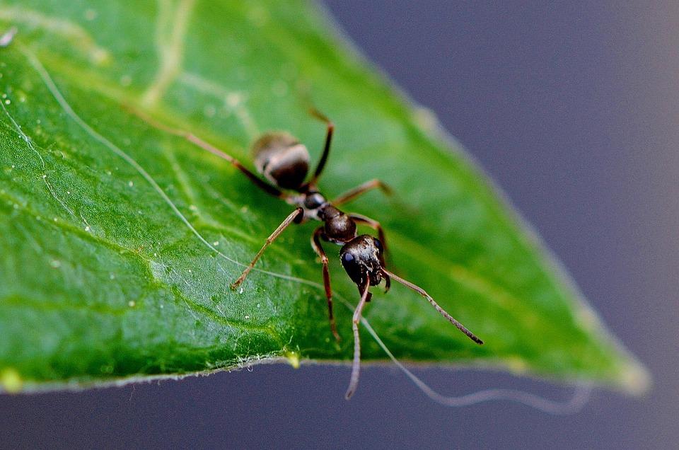 Come eliminare le formiche dall 39 orto giardini e campi sherena srl - Come debellare le formiche in casa ...