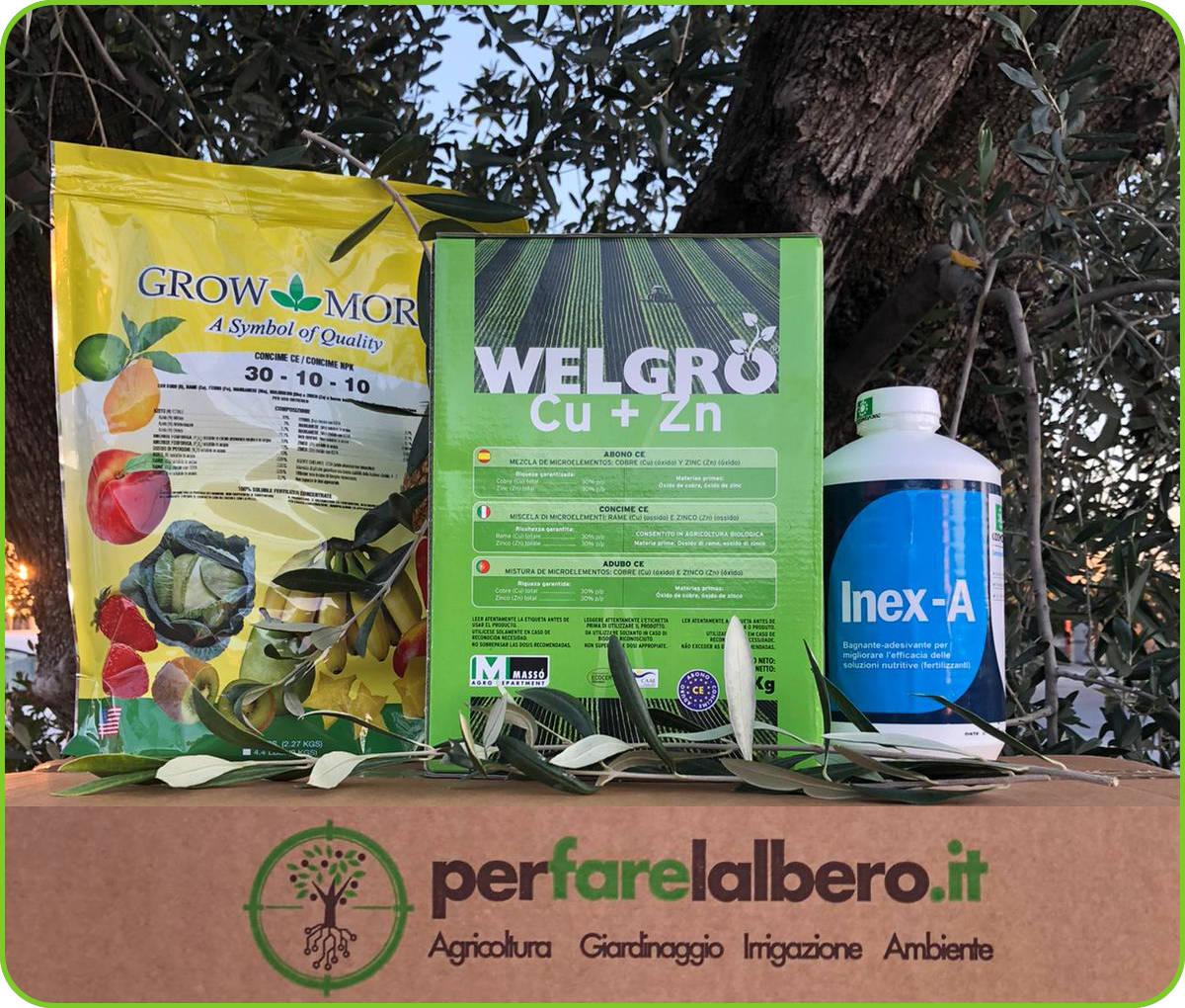 trattamento olivo post raccolta