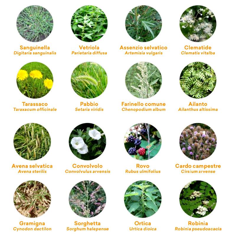 principali erbe infestanti