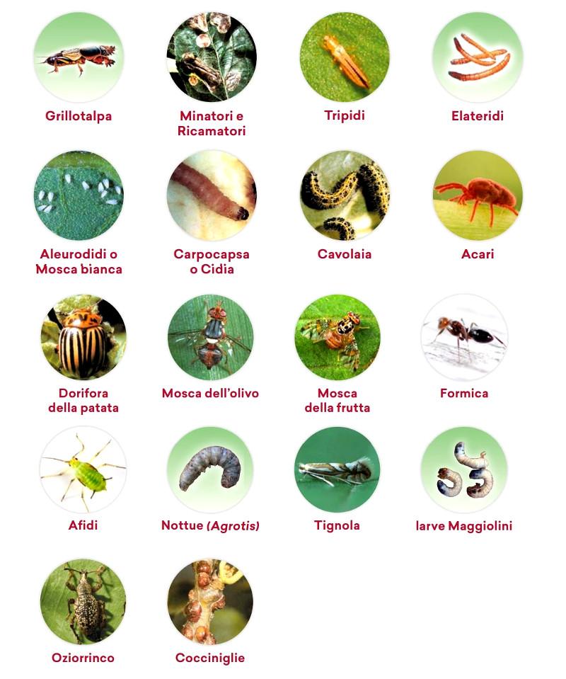principali parassiti delle piante