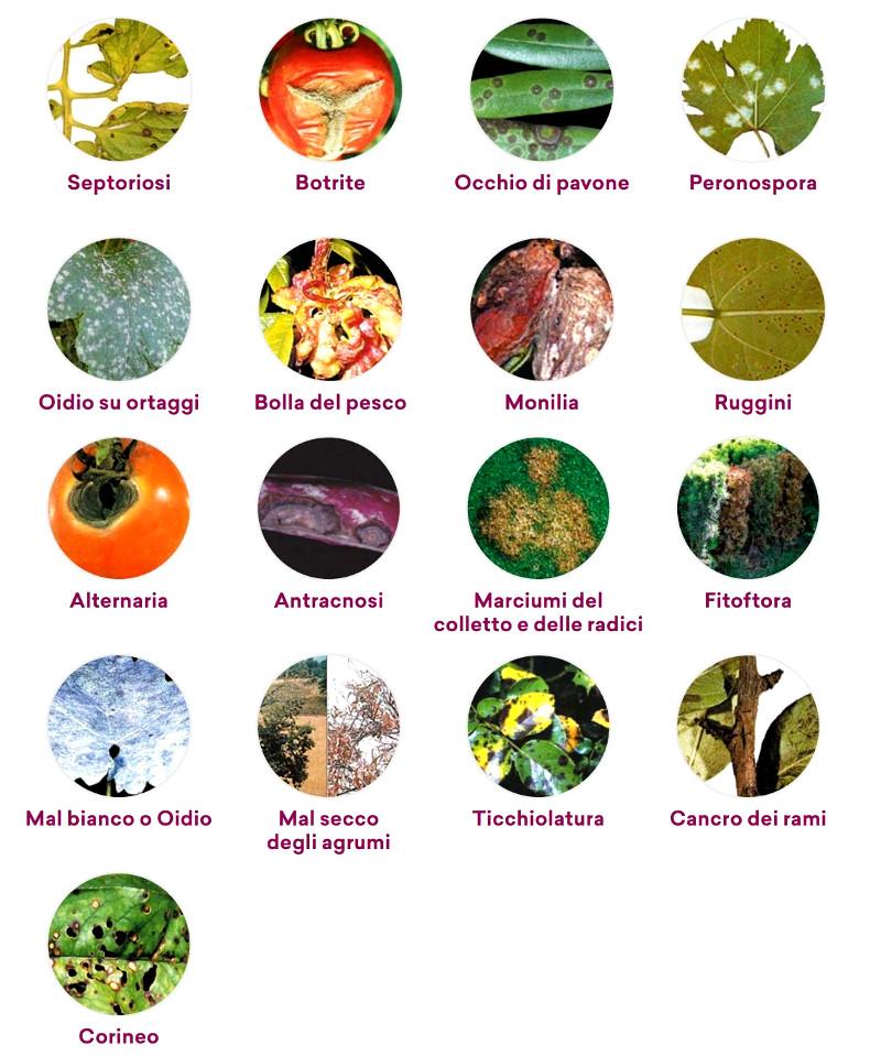 principali patologie funginee delle piante