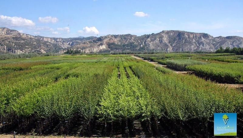 vendita piante on line