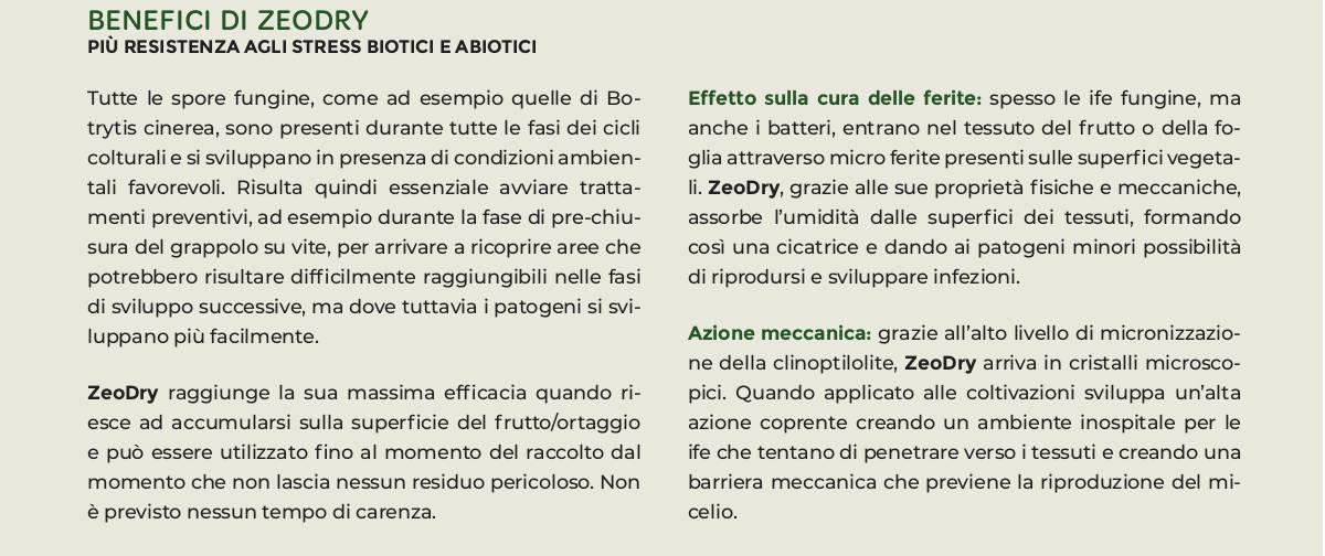 zeodry zeolite clinoptilolite